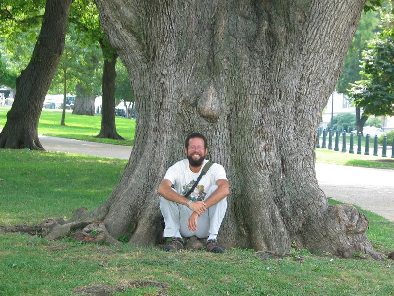 Scotch Elm, Ulmus glabra